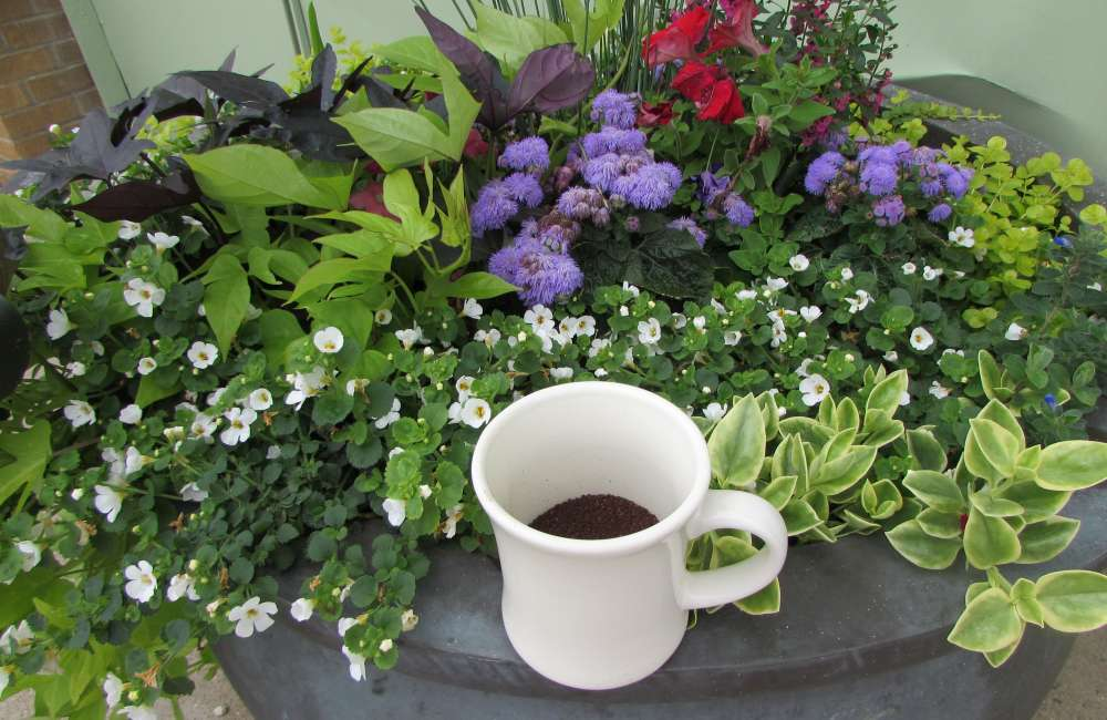 Coffee Mug On Outdoor Planter