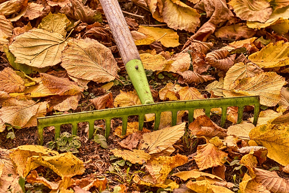 Autumn Rake For Leaves