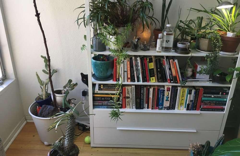 Indoor Plants On Book Shelf