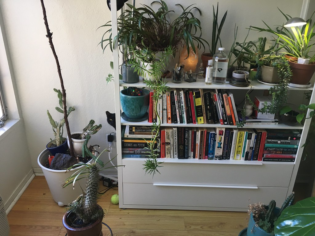 Indoor Plants On Book Shelf